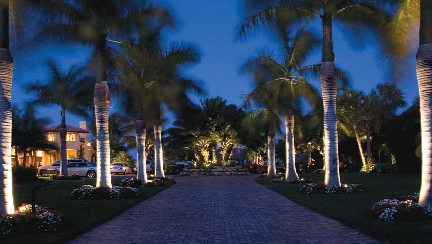 Palm Lighting Particulars